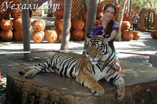 Тигри в Паттайя