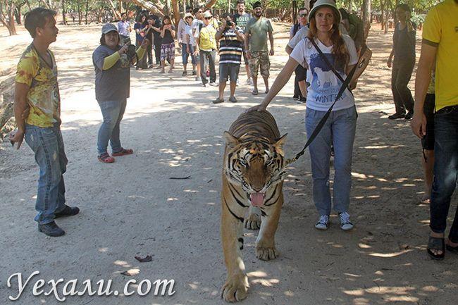 Тигровий храм в Канчанабурі