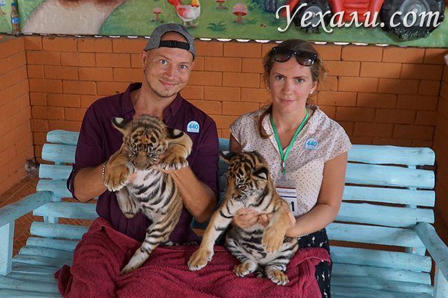 Екскурсія Діскавері в Паттайя, фото з тиграми