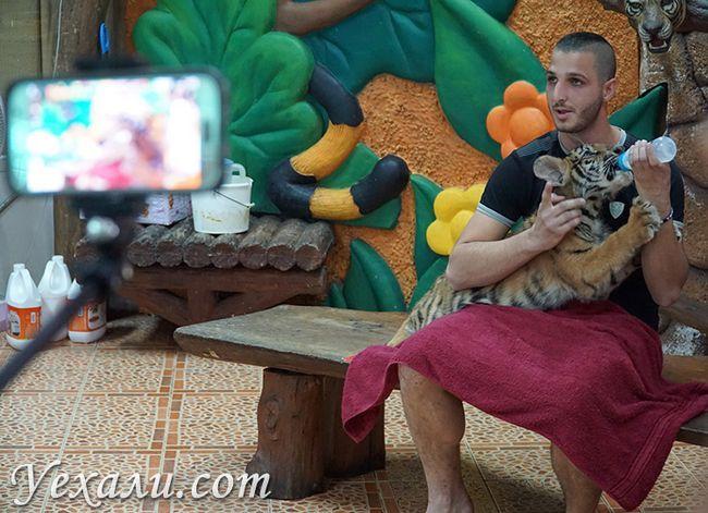 Годування тигренят у зоопарку