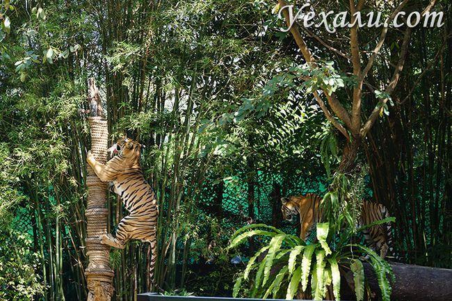 Тигри в Паттайя, зоопарк Као Кео, шоу тварин