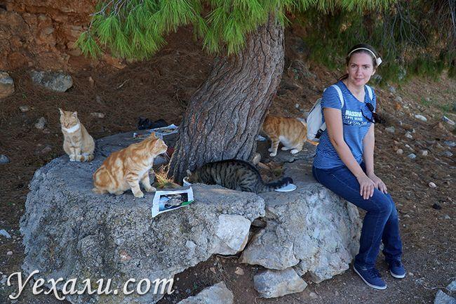 Острів Гідра в Греції - самий котячий!