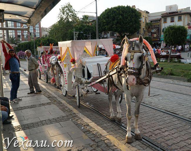 Катання на конях в Анталії