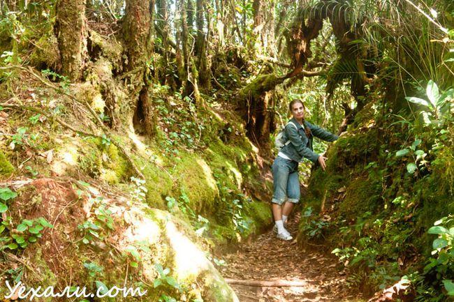 Трекінг в Камерон Хайлендс, сходження на гору Брінчанг.