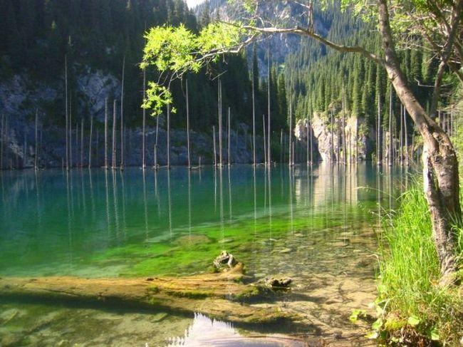 Затоплений ліс озера каїнди або кайнд (lake kaindy)