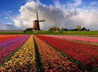 «Перлина європи» - пам`ятки королівства нідерланди