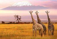 Мальовничі заповідники і національні парки африки